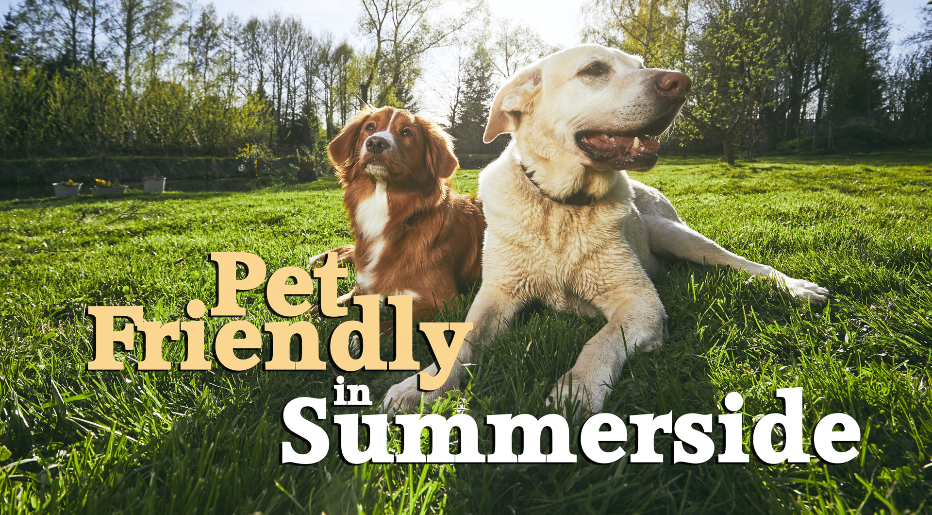 Pet Friendly Locations in Summerside